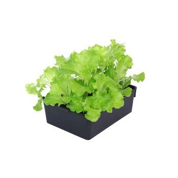 Barquette de 12 salades