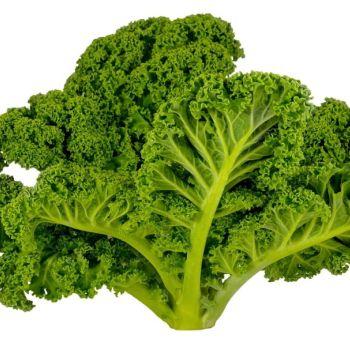 Chou Kale KG